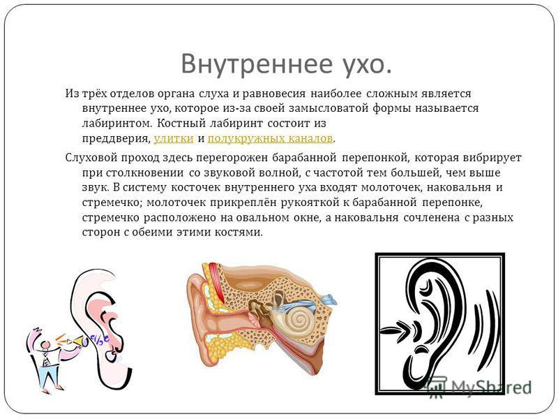 Среднее ухо. Основной частью среднего уха является барабанная полость небольшое пространство объёмом около 1 см ³, находящееся в височной кости. Здесь находятся три слуховые косточки : молоточек, наковальня и стремечко они передают звуковые колебания