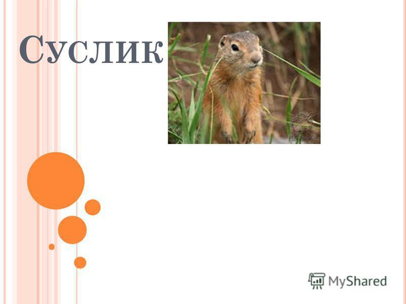 С УСЛИК