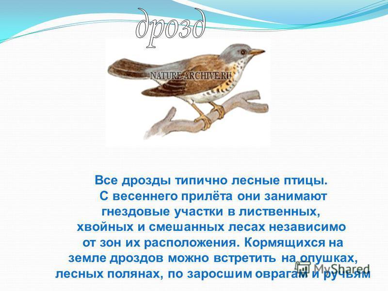 Все дрозды типично лесные птицы. С весеннего прилёта они занимают гнездовые участки в лиственных, хвойных и смешанных лесах независимо от зон их расположения. Кормящихся на земле дроздов можно встретить на опушках, лесных полянах, по заросшим оврагам