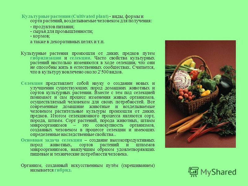 Культурные растения (Cultivated plant) - виды, формы и сорта растений, возделываемые человеком для получения: - продуктов питания; - сырья для промышленности; - кормов; а также в декоративных целях и т.п. Культурные растения произошли от диких предко