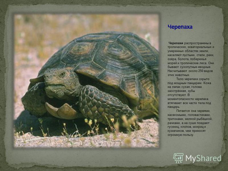 Черепахи распространены в тропических, экваториальных и умеренных областях земли, населяют пустыни, степи, реки, озёра, болота, побережья морей и тропические леса. Они бывают сухопутные и водные. Насчитывают около 250 видов этих животных. Тело черепа
