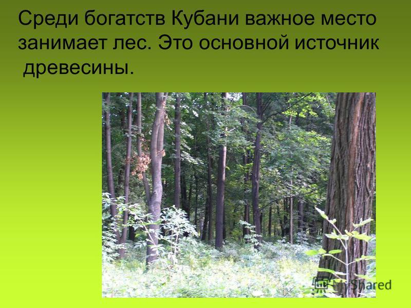 Среди богатств Кубани важное место занимает лес. Это основной источник древесины.