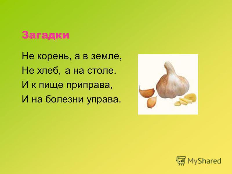 Загадки Не корень, а в земле, Не хлеб, а на столе. И к пище приправа, И на болезни управа.