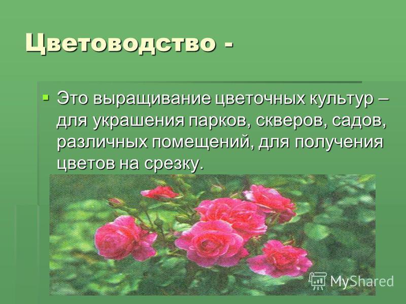 Цветоводство - Это выращивание цветочных культур – для украшения парков, скверов, садов, различных помещений, для получения цветов на срезку. Это выращивание цветочных культур – для украшения парков, скверов, садов, различных помещений, для получения