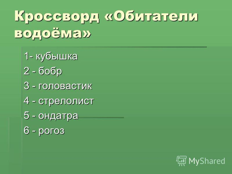 Кроссворд «Обитатели водоёма» 1- кубышка 2 - бобр 3 - головастик 4 - стрелолист 5 - ондатра 6 - рогоз
