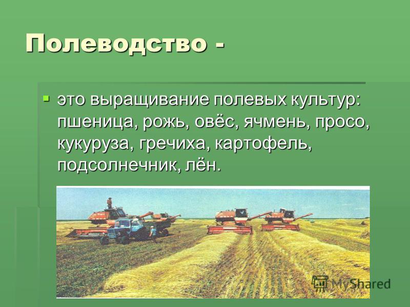 Полеводство - это выращивание полевых культур: пшеница, рожь, овёс, ячмень, просо, кукуруза, гречиха, картофель, подсолнечник, лён. это выращивание полевых культур: пшеница, рожь, овёс, ячмень, просо, кукуруза, гречиха, картофель, подсолнечник, лён.