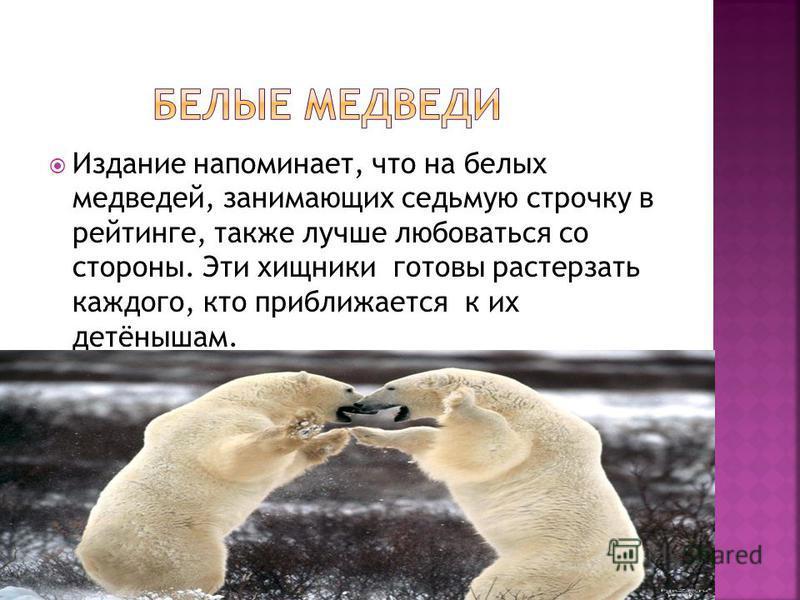 Издание напоминает, что на белых медведей, занимающих седьмую строчку в рейтинге, также лучше любоваться со стороны. Эти хищники готовы растерзать каждого, кто приближается к их детёнышам.