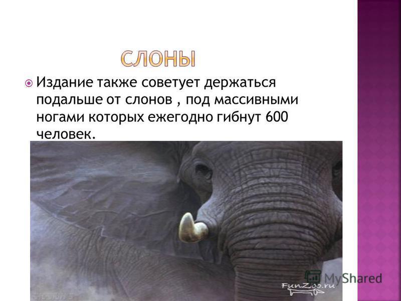 Издание также советует держаться подальше от слонов, под массивными ногами которых ежегодно гибнут 600 человек.