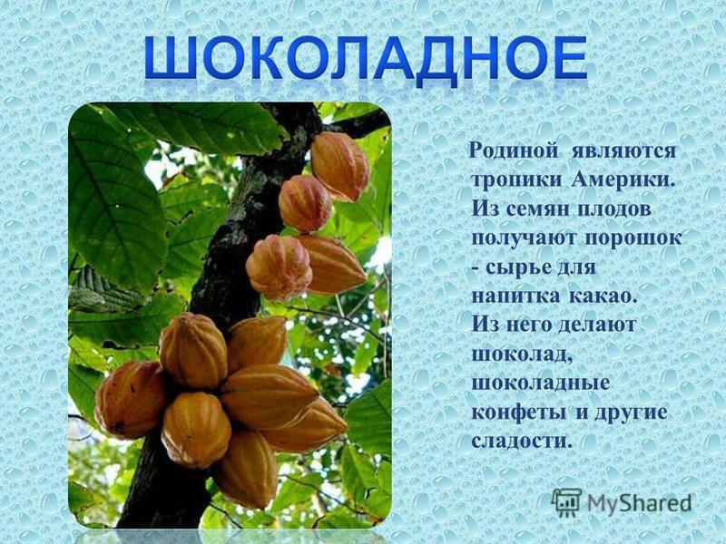 Родиной являются тропики Америки. Из семян плодов получают порошок - сырье для напитка какао. Из него делают шоколад, шоколадные конфеты и другие сладости.