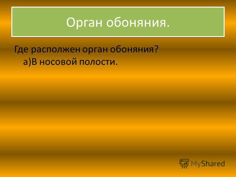 Орган обоняния. Где расположен орган обоняния? а)В носовой полости.