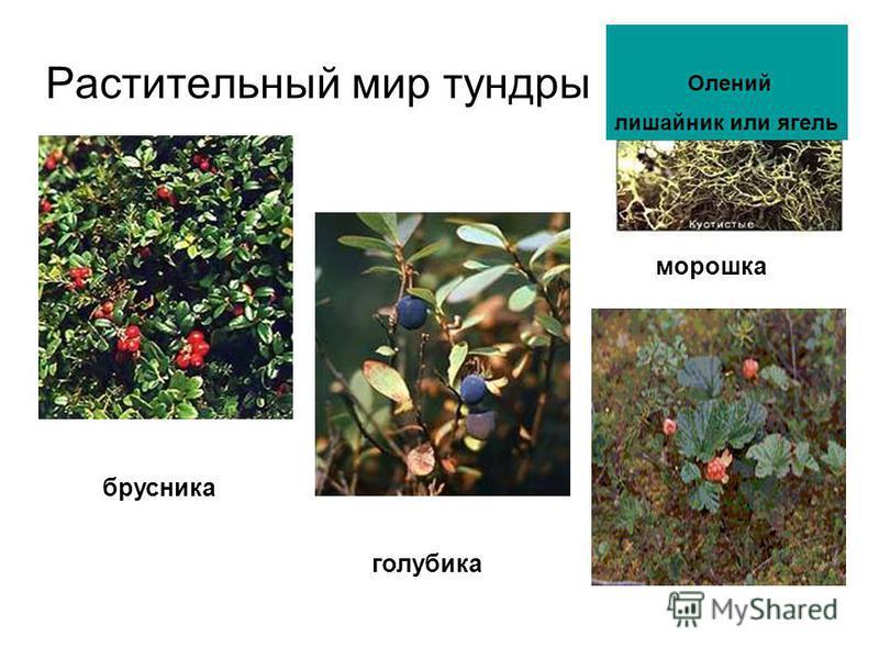 какие животные занесены в красную книгу россии рассказы