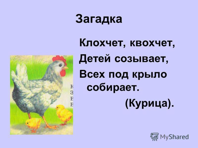 Загадка Клохчет, квохчет, Детей созывает, Всех под крыло собирает. (Курица).