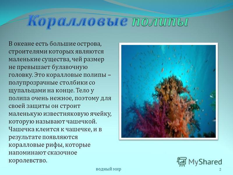 Как образуются и где обитают кораллы ?