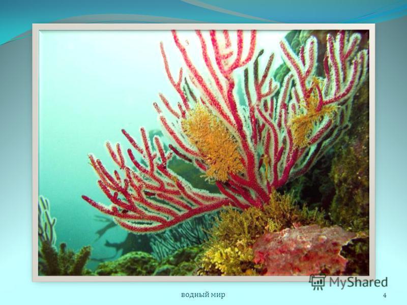 В густых зарослях кораллов находят для себя убежище и пищу многочисленные моллюски, рыбы и многие другие животные. Часть из них всю жизнь прячутся внутри колонии. Иногда риф обрастает такое животное со всех сторон, и оно оказывается навсегда замурова
