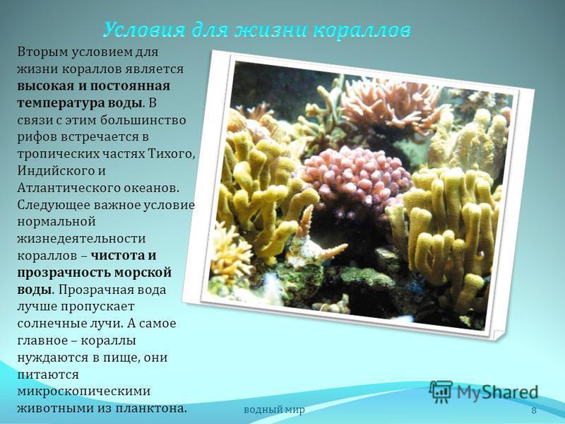Для роста и процветания кораллового рифа необходимо наличие благоприятных условий. Морская вода должна быть с нормальной океанической соленостью. Поэтому во время сильных дождей, когда соленость в прибрежных частях моря понижается, большое количество