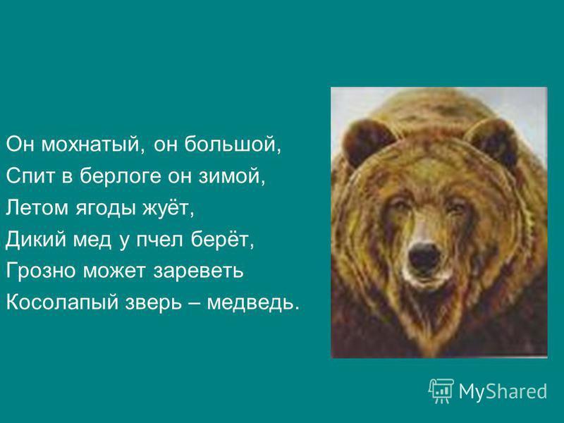 Он мохнатый, он большой, Спит в берлоге он зимой, Летом ягоды жуёт, Дикий мед у пчел берёт, Грозно может зареветь Косолапый зверь – медведь.