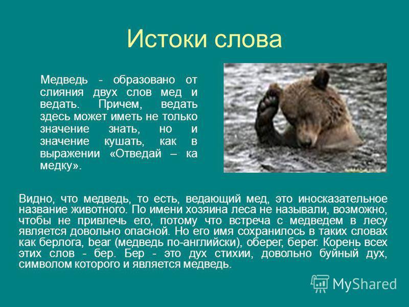 Истоки слова Медведь - образовано от слияния двух слов мед и ведать. Причем, ведать здесь может иметь не только значение знать, но и значение кушать, как в выражении «Отведай – ка медку». Видно, что медведь, то есть, ведающий мед, это иносказательное