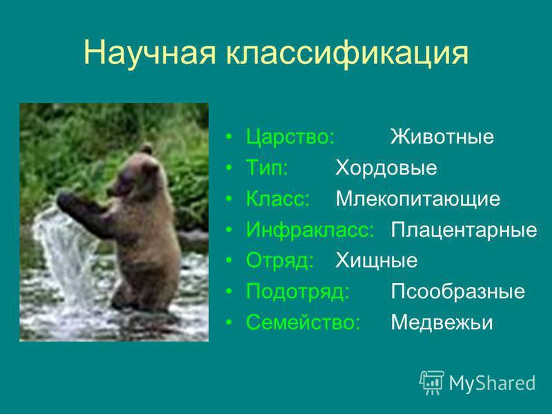 Научная классификация Царство:Животные Тип:Хордовые Класс:Млекопитающие Инфракласс:Плацентарные Отряд:Хищные Подотряд:Псообразные Семейство:Медвежьи