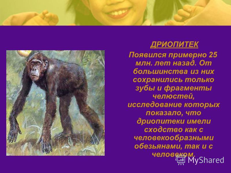 ДРИОПИТЕК Появился примерно 25 млн. лет назад. От большинства из них сохранились только зубы и фрагменты челюстей, исследование которых показало, что дриопитеки имели сходство как с человекообразными обезьянами, так и с человеком.