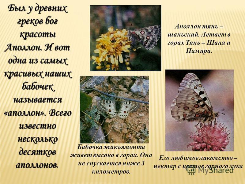 Был у древних греков бог красоты Аполлон. И вот одна из самых красивых наших бабочек называется «аполлон». Всего известно несколько десятков аполлонов Был у древних греков бог красоты Аполлон. И вот одна из самых красивых наших бабочек называется «ап