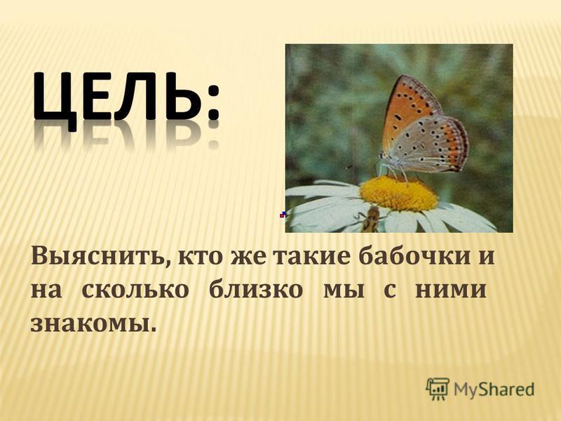 Выяснить, кто же такие бабочки и на сколько близко мы с ними знакомы.