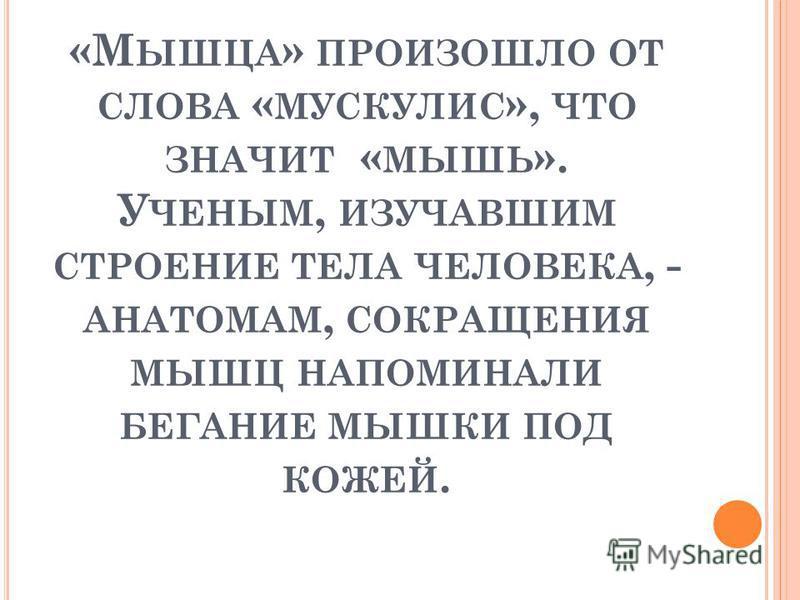 «М ЫШЦА » ПРОИЗОШЛО ОТ СЛОВА « МУСКУЛИС », ЧТО ЗНАЧИТ « МЫШЬ ». У ЧЕНЫМ, ИЗУЧАВШИМ СТРОЕНИЕ ТЕЛА ЧЕЛОВЕКА, - АНАТОМАМ, СОКРАЩЕНИЯ МЫШЦ НАПОМИНАЛИ БЕГАНИЕ МЫШКИ ПОД КОЖЕЙ.
