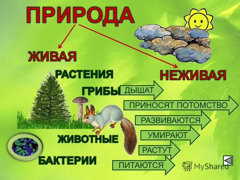 Природа удивительно разнообразна. В природе всё взаимосвязано. Люди не могут жить без природы. Значение природы для человека Связи в природе Разнообразие природы и её классификация