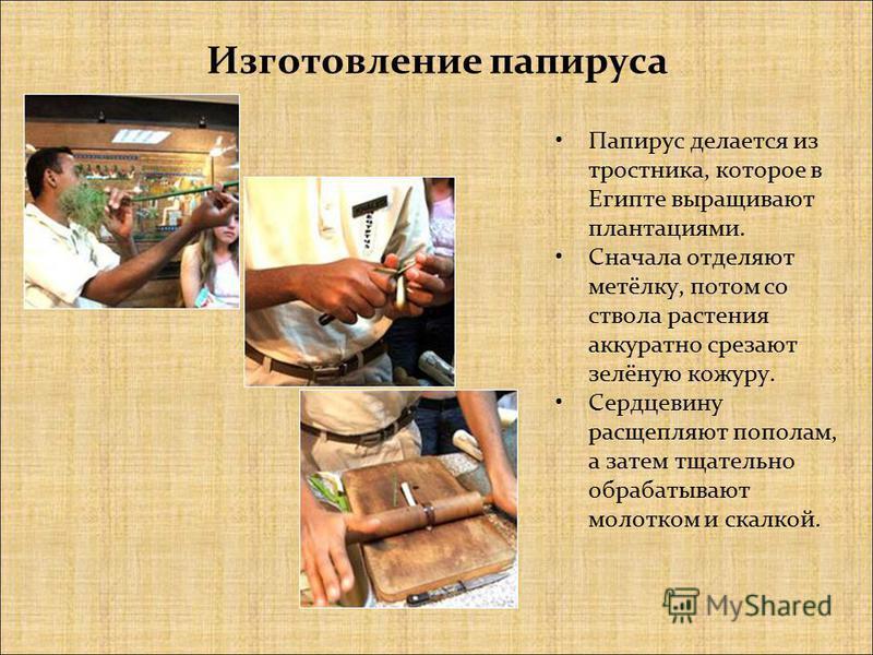 Изготовление папируса Папирус делается из тростника, которое в Египте выращивают плантациями. Сначала отделяют метёлку, потом со ствола растения аккуратно срезают зелёную кожуру. Сердцевину расщепляют пополам, а затем тщательно обрабатывают молотком