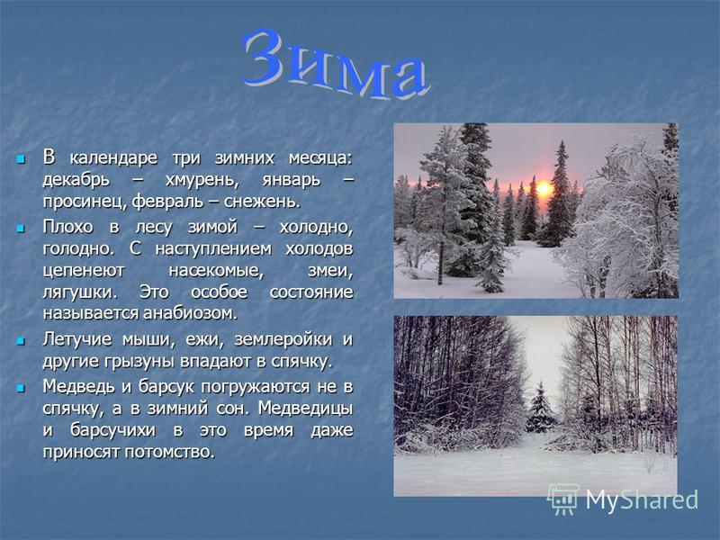 В календаре три зимних месяца: декабрь – хмурень, январь – просинец, февраль – снежень. В календаре три зимних месяца: декабрь – хмурень, январь – просинец, февраль – снежень. Плохо в лесу зимой – холодно, голодно. С наступлением холодов цепенеют нас