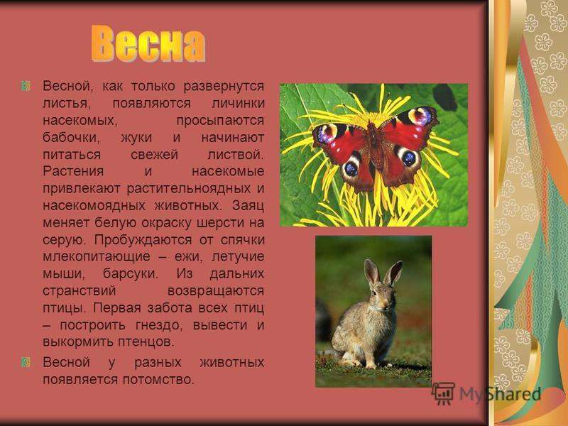 Весной, как только развернутся листья, появляются личинки насекомых, просыпаются бабочки, жуки и начинают питаться свежей листвой. Растения и насекомые привлекают растительноядных и насекомоядных животных. Заяц меняет белую окраску шерсти на серую. П