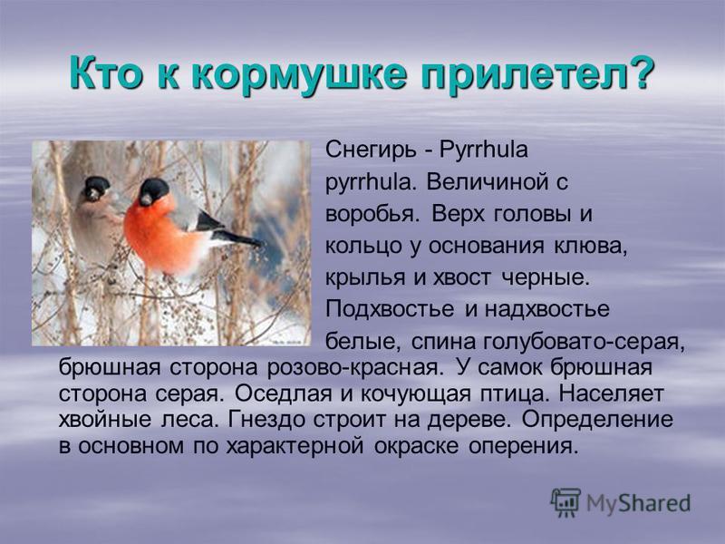 Кто к кормушке прилетел? Снегирь - Pyrrhula pyrrhula. Величиной с воробья. Верх головы и кольцо у основания клюва, крылья и хвост черные. Подхвостье и надхвостье белые, спина голубовато-серая, брюшная сторона розово-красная. У самок брюшная сторона с
