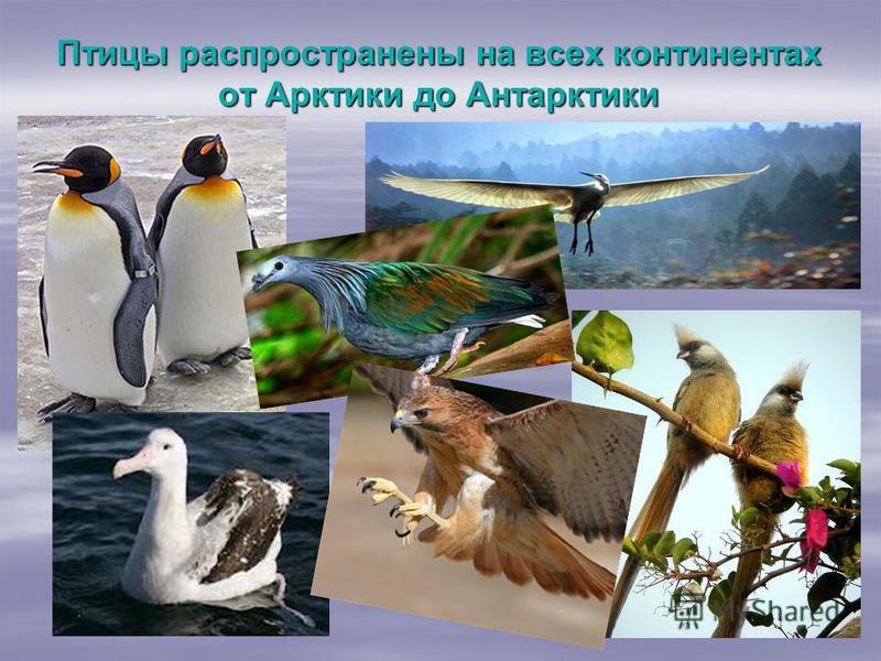 Птицы распространены на всех континентах от Арктики до Антарктики