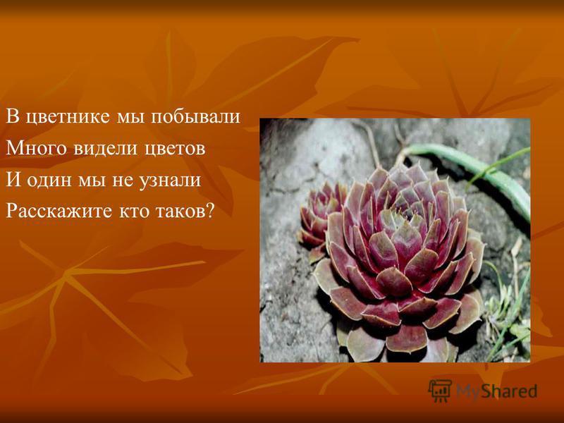 В цветнике мы побывали Много видели цветов И один мы не узнали Расскажите кто таков?