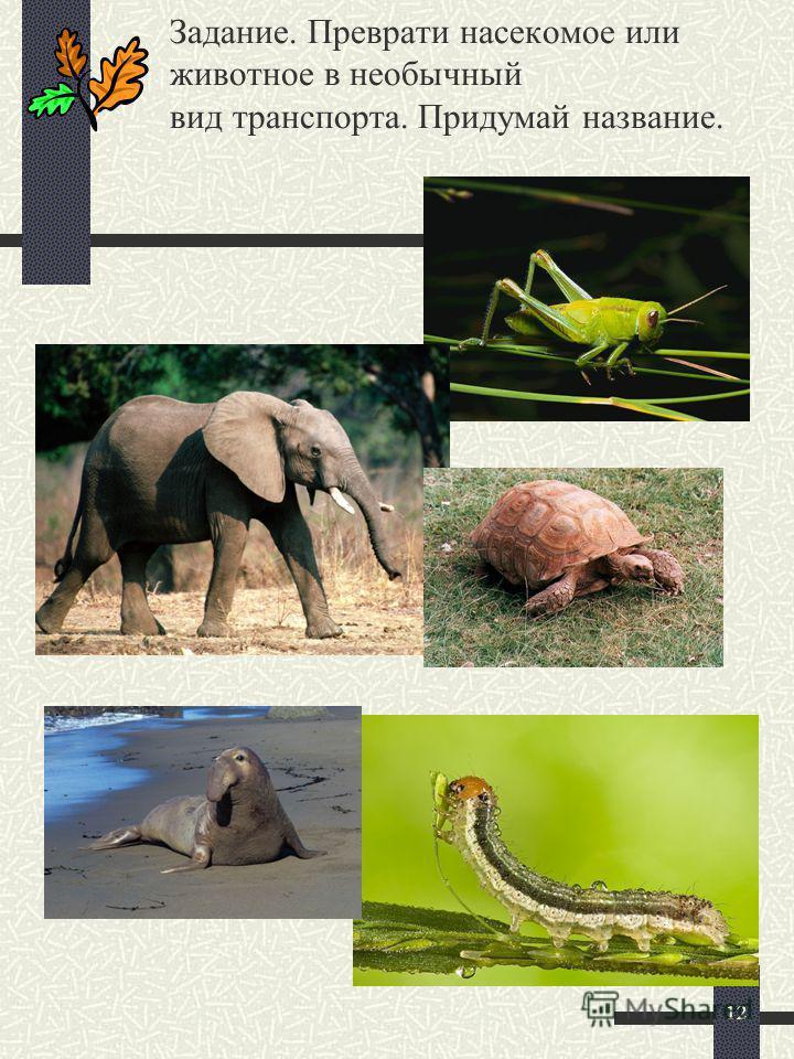 11 В путешествие – всей семьёй, а вот жирафик – только мой!