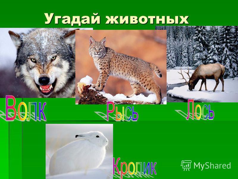 Угадай животных