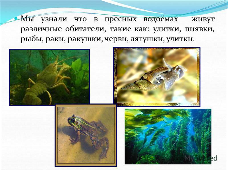 Мы узнали что в пресных водоёмах живут различные обитатели, такие как: улитки, пиявки, рыбы, раки, ракушки, черви, лягушки, улитки.