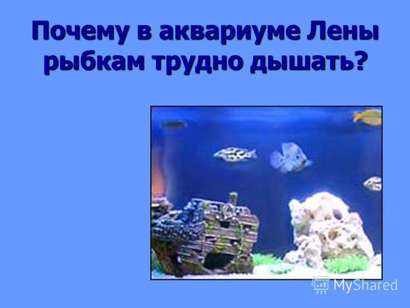 Окружающий мир 3 класс аквариум маленькая искусственная экосистема решебник