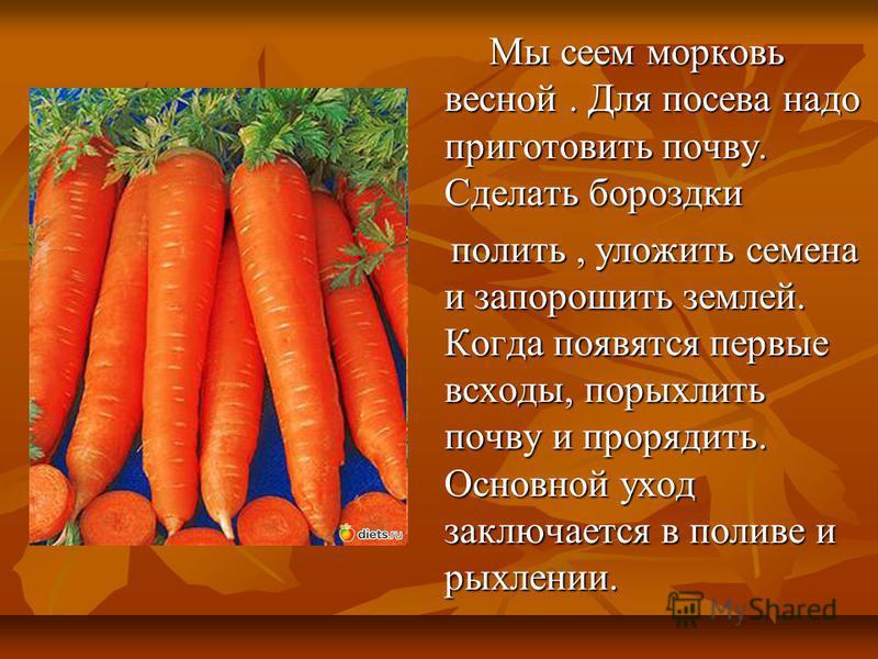 Мы сеем морковь весной. Для посева надо приготовить почву. Сделать бороздки Мы сеем морковь весной. Для посева надо приготовить почву. Сделать бороздки полить, уложить семена и запорошить землей. Когда появятся первые всходы, по рыхлить почву и проре