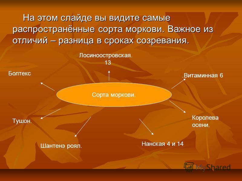 Сорта моркови. Лосиноостровская. 13 Королева осени. Тушон.. Болтекс На этом слайде вы видите самые распространённые сорта моркови. Важное из отличий – разница в сроках созревания. На этом слайде вы видите самые распространённые сорта моркови. Важное