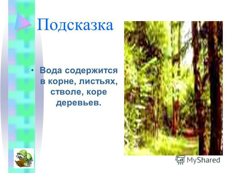 Подсказка Вода содержится в корне, листьях, стволе, коре деревьев.