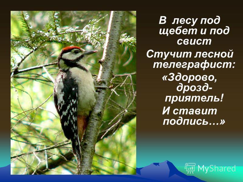Угадайте, что за птица: Света яркого боится, Клюв крючком, глаза пятачком, Ушастая голова. Это..