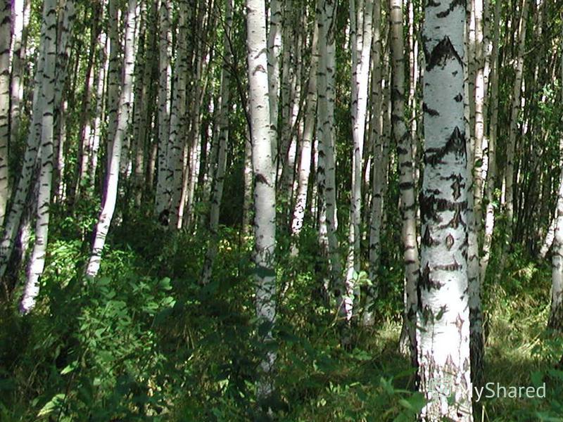 Вырубка лесов и уничтожение растений