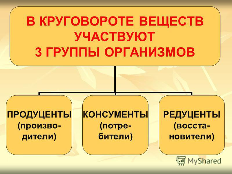 В КРУГОВОРОТЕ ВЕЩЕСТВ УЧАСТВУЮТ 3 ГРУППЫ ОРГАНИЗМОВ ПРОДУЦЕНТЫ (производители) КОНСУМЕНТЫ (потребители) РЕДУЦЕНТЫ (восстановители)