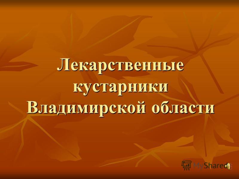 Лекарственные кустарники Владимирской области