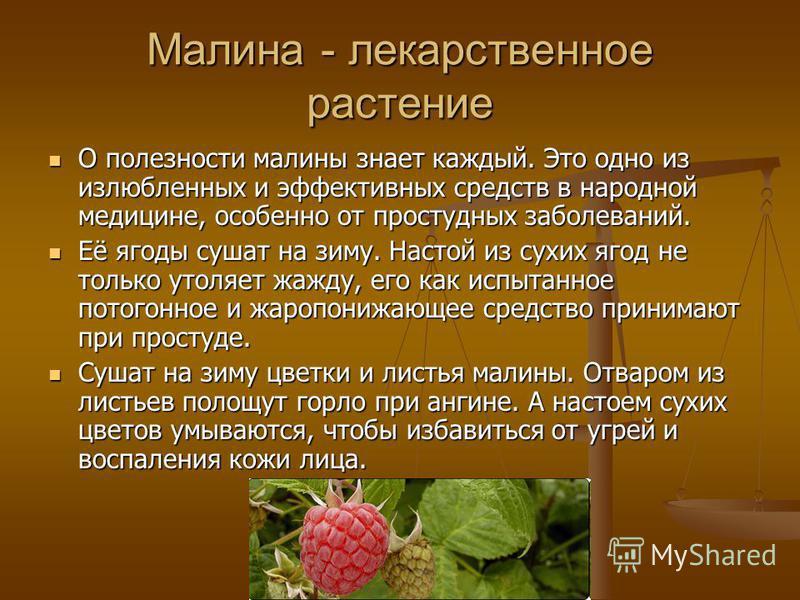 Малина - лекарственное растение О полезности малины знает каждый. Это одно из излюбленных и эффективных средств в народной медицине, особенно от простудных заболеваний. О полезности малины знает каждый. Это одно из излюбленных и эффективных средств в