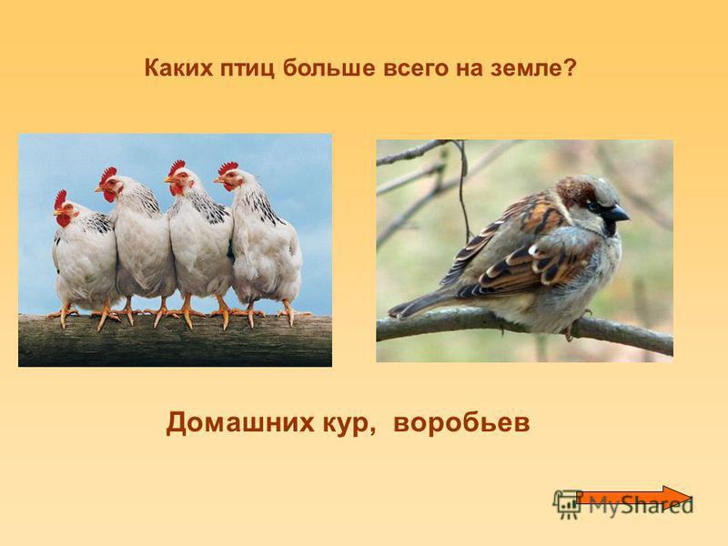 Каких птиц больше всего на земле? Домашних кур, воробьев