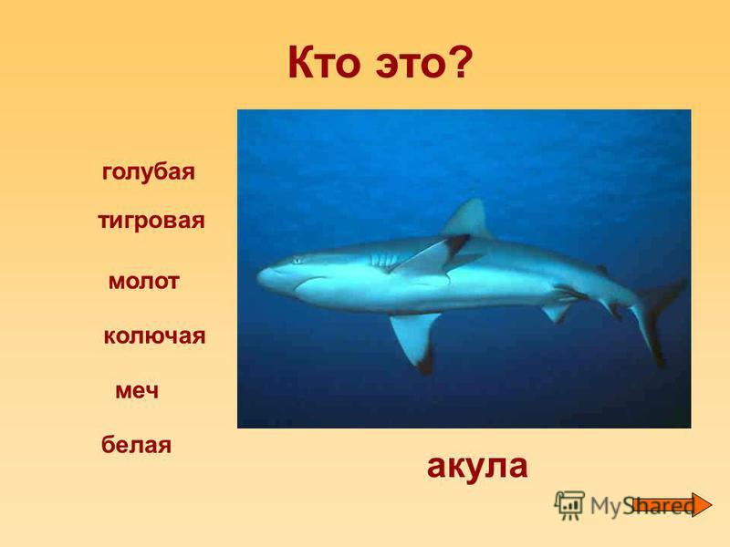 Кто это? голубая тигровая молот меч белая колючая акула