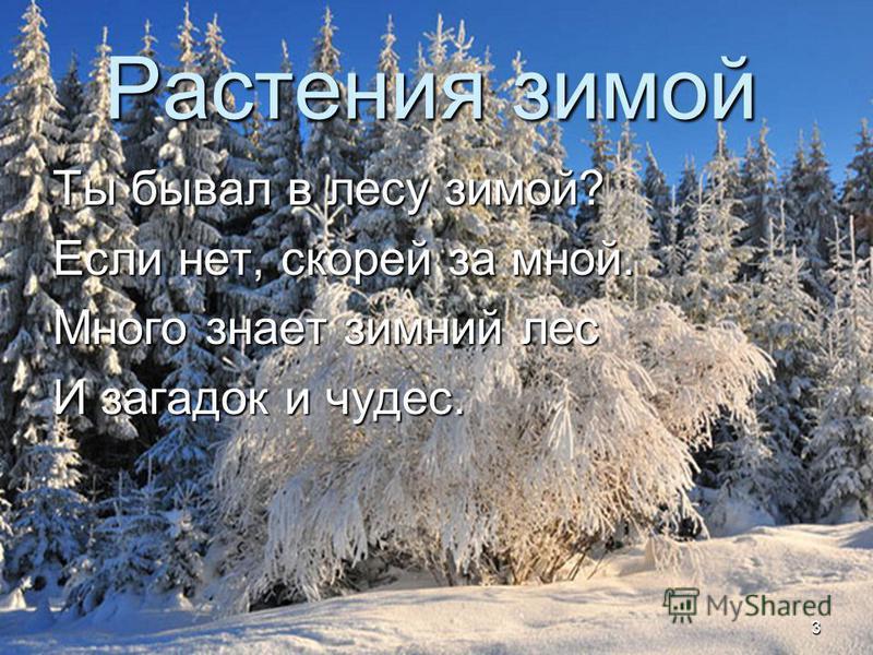 Жизнь растений зимой в картинках 3 класс