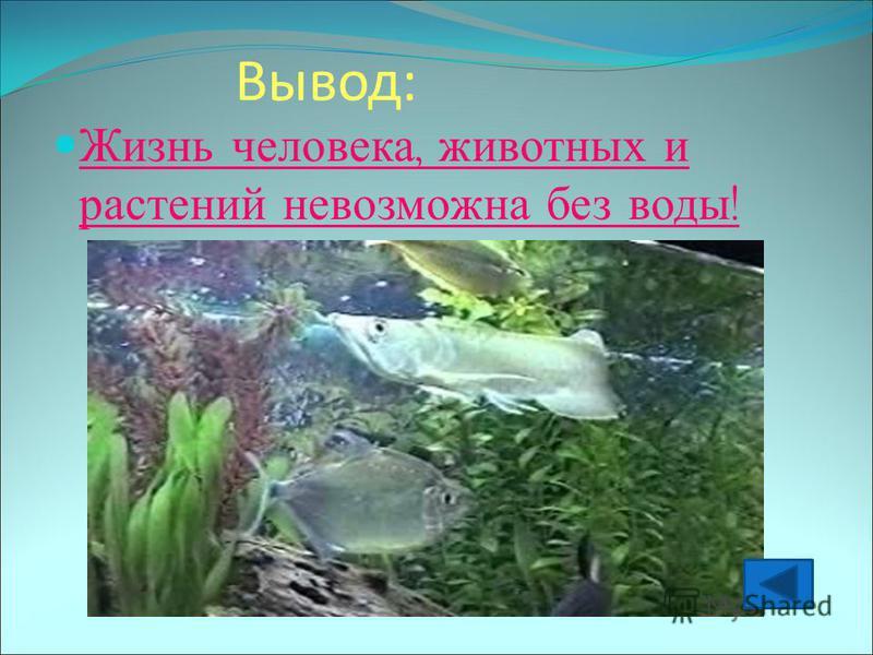 Вывод: Жизнь человека, животных и растений невозможна без воды !
