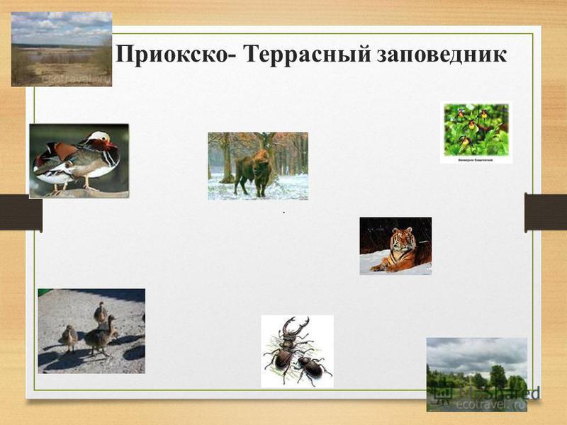 Животные лесов